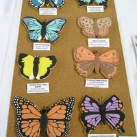 Butterfly Specimen Display This was my entry for the2011 MD cake show this past weekend. I see beautiful butterflies all the time done in cookies, and I wanted to...