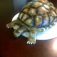 Box Turtle Cake this is an yellow cake with fondant, airbrush. This is an very special cake i made this is a class that was given by Brian Stevens from...