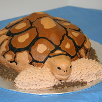 3-D African Spurred Tortoise Brithday Cake A customer ordered this cake for her daughter's birthday. The young girl LOVES the African spurred tortoise, so I did my best to mimic...