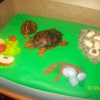 Eastern Box Turtles   made for a man who rescues box turtles.