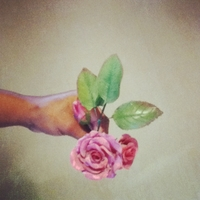 Learning How To Make Gumpastes Roses   gumpaste flowers.