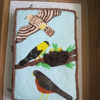 Birding Theme Birthday Cake Frozen buttercream transfer birds on simple chocolate sheet cake for my daughter's bird-themed birthday party; nest is chocolate-...