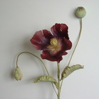 This Poppy Appeared From Nowhere In A Patch Of Gravel With No Water No Soil But Bloomed For Ages They Must Be Very Hardy Thank You For This poppy appeared from nowhere in a patch of gravel with no water, no soil but bloomed for ages - they must be very hardy! Thank you for...