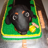 Dachsund Birthday Cake!  Dachsund, tennis ball and rawhide bone made for a Birthday Girl, Roxanne! Dachsund head is made of rice krispies covered in fondant. Body...