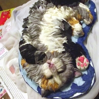 Sleepy Kitten Cake Calico cat with fondant hair.