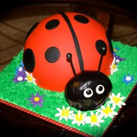 Lady Bug Cake This is a Vanilla cake with vanilla buttercream filling. All covered in fondant. Lady Bug is also carved.