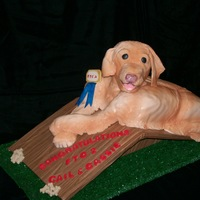 Golden Retriever On A Slide Board White cake body, RKT head and front legs, covered with MMF