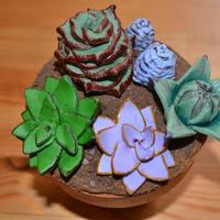 Fondant Succulents On A Plant Pot Cake Margarita Flavoured With Orange Buttercream And Cookie Dirt It Was A Gift For A Friend Who Gave *Fondant succulents on a plant pot cake (margarita flavoured) with orange buttercream and cookie dirt. It was a gift for a friend who gave...