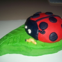 Ladybug Cake A birthday cake I made for my niece. Ladybug was Citrus vanilla cake with strawberry filling. The leaf was chocolate chip cake with...