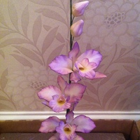 Hand Made Sugar Paste Orchid Hand made Sugar paste Orchid