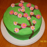 First Cherry Blossom Cake This is my first attempt at cherry blossoms. Its all butter cream with the cherry blossoms being drop flowers. I cant wait to figure out a...