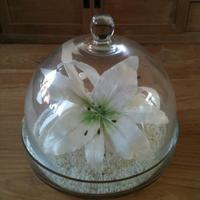White Lilies Under Bell Jar Made this 3 white lilies from flower paste to put under a bell jar and place it on my table.