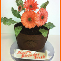 Gerber Daisies Three layers of chocolate cake, two layers of Cran-Raspberry SMBC and fresh raspberries. The cake is carved to the shape of a flower pot,...