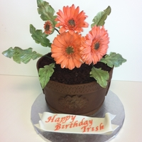 Gerber Daisy Three layers of chocolate cake, two layers of Cran-Raspberry SMBC and fresh raspberries. The cake is carved to the shape of a flower pot,...