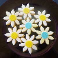 Daisies NFSC, fondant on top