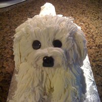 Pekingese Doggy Cake White Peke Dog Cake. I covered the cake in fondant and attached fondant hair, pressed through a garlic press (used only for fondant).