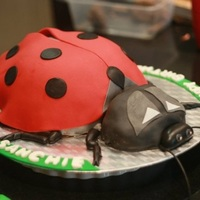 Lady Bug Chocolate Cake I made this Lady Bug Chocolate cake for my grand-daughter's 2-year birthday using MM fondant cover and decorations and Wilton Gel...