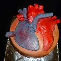 Human Heart   made for a school project. chocolate cake with chocolate filling