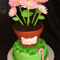 Flower Pot 1St Birthday Flower Pot cake with pink sugar gerber daisies.