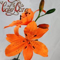 First Time Lilium practicing flowers..thaks for looking