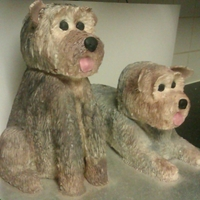 Yorkshire Terriers Here's 2 larger than lifesized yorkshire terrier cakes I made....42 cakes!