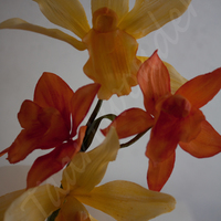 Sugar Orchids Cattleya Orchids And Dendrobium Orchids Sugar orchids: cattleya orchids and dendrobium orchids