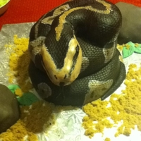 Snake Cake A snake cake made for my sis in law