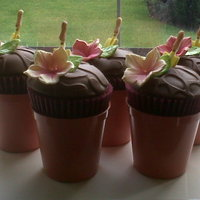 Potted Chocolate Cuppies   Hershey chocolate plant pots sitting in the sun waiting for collection.