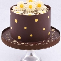 Dark Chocolate And Yellow Polkadot Collar With Chocolate Daisies Coffee pouncake with a vanilla buttercream filling decorated with a dark chocolate and yellow polkadot collar and chocolate daisies.