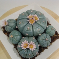 Lophophora Williamsii/peyote Cactus Cake