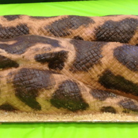 Burmese Python Birthday For My Twin Nephews 9Th Birthday   Burmese Python birthday for my twin nephews 9th birthday!