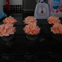 6 Little Imbc Cupcakes First Try