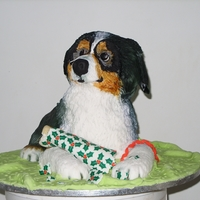 Australian Sheppard cake to celebrate my friends Australian Sheppard dog becoming top puppy in breed