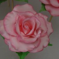Gum Paste Roses   Large pink rose