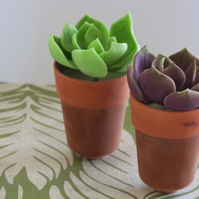 Chocolate Succulents