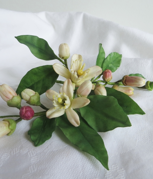 Sugar Zagara Flowers, The Blossoms Of Citrus Trees