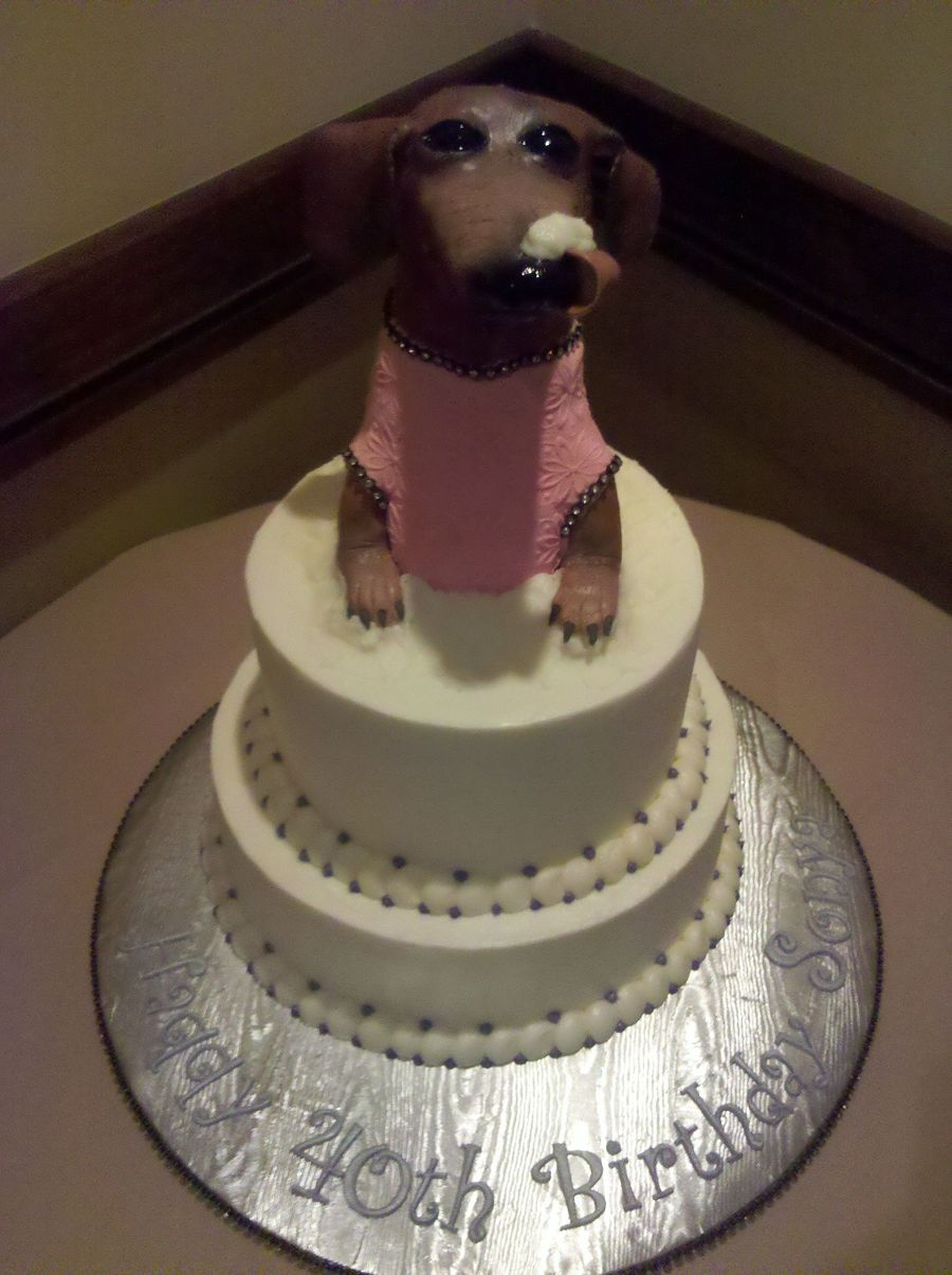 Can Dogs Eat Chocolate Cake - Tadwal.net