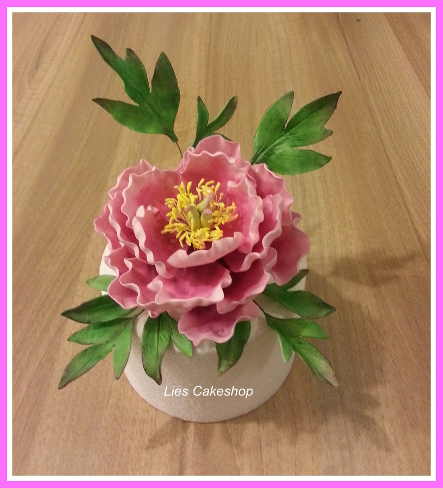 Peony on Cake Central