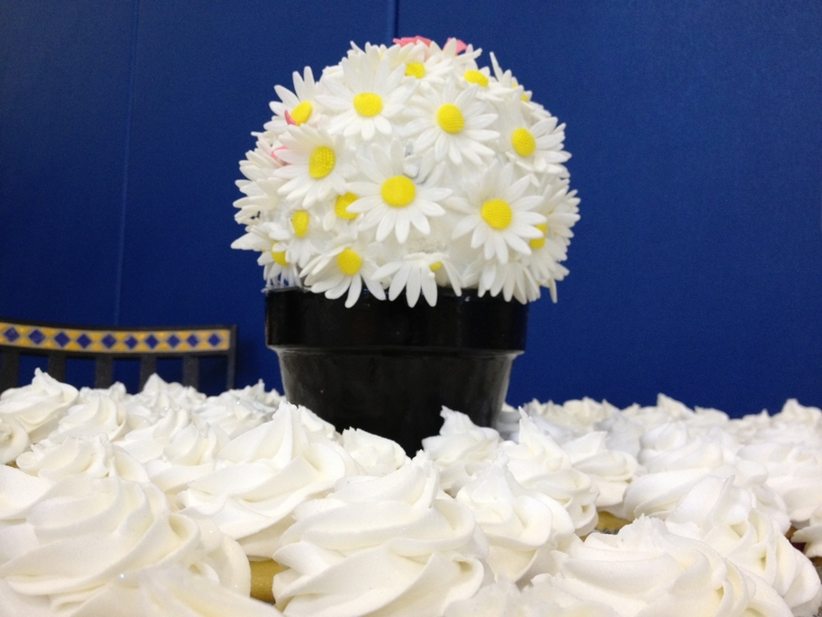 Daisies And Cuppies on Cake Central