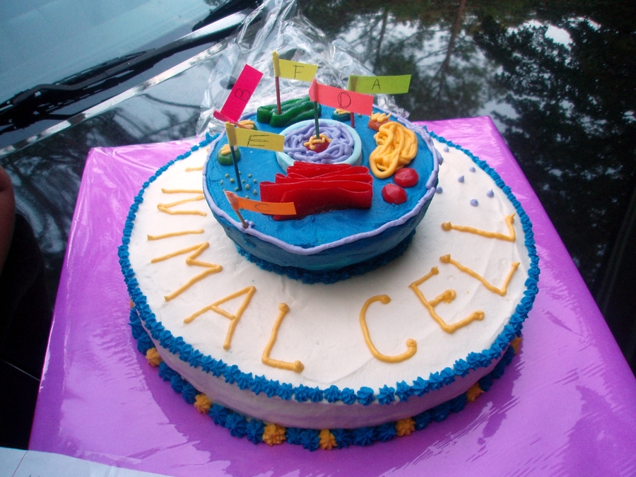 Animal Cell Cake Science Project