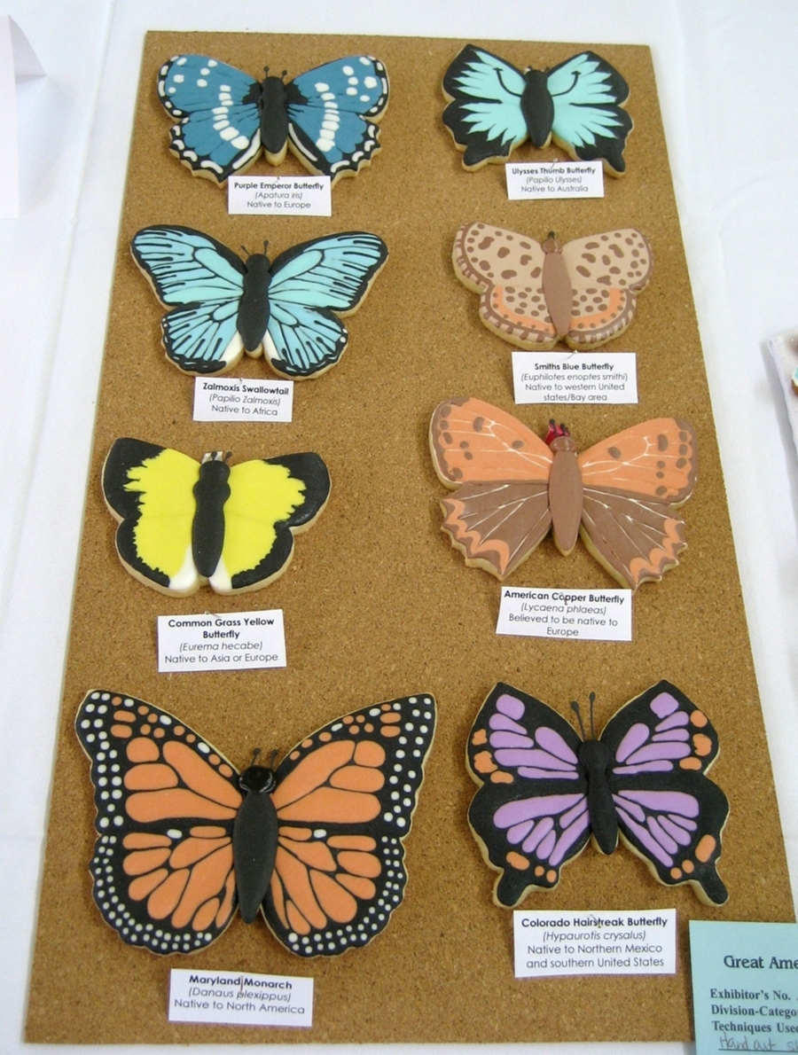 Butterfly Specimen Display  on Cake Central