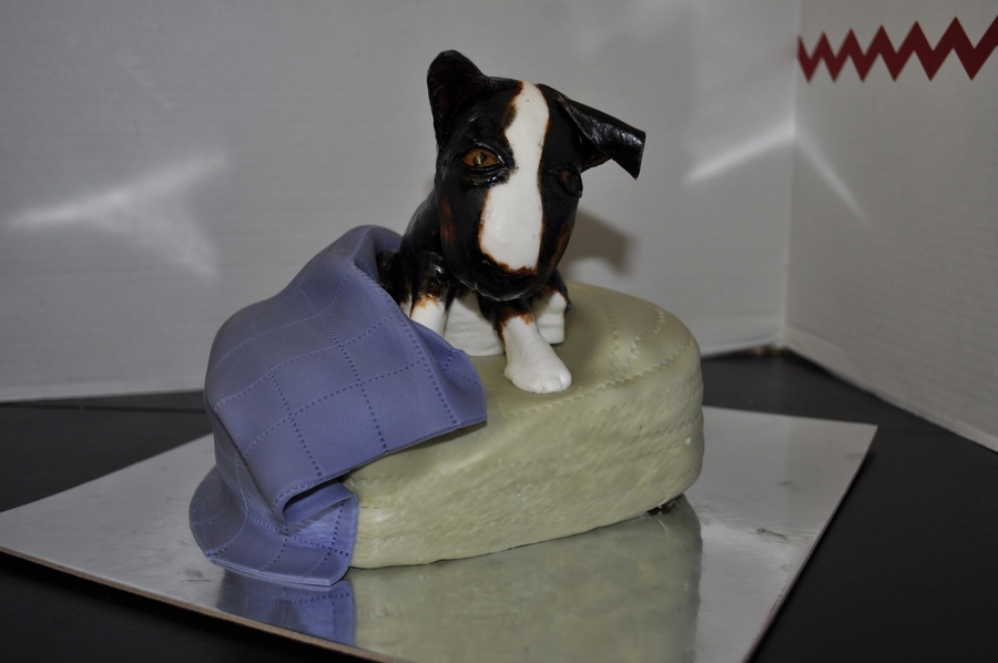Dog On Doggy Bed on Cake Central