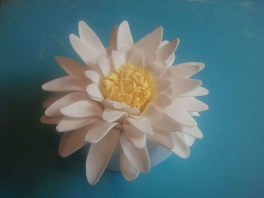 My Attempt At Making A Water Lily  on Cake Central