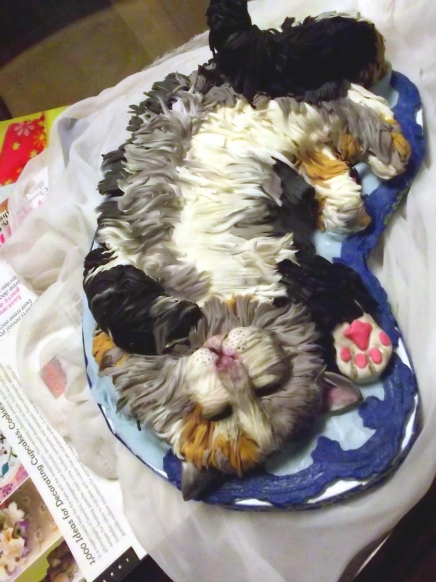 Sleepy Kitten Cake Cakecentral Com
