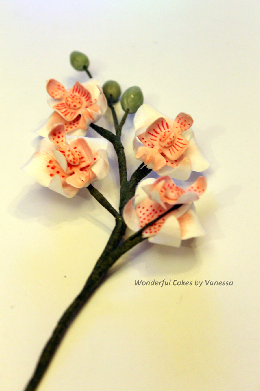 Moth Orchid Made During The Course Pme Professional Diploma Sugar Flowers  on Cake Central