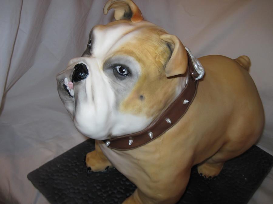 Bulldog Cake - CakeCentral.com
