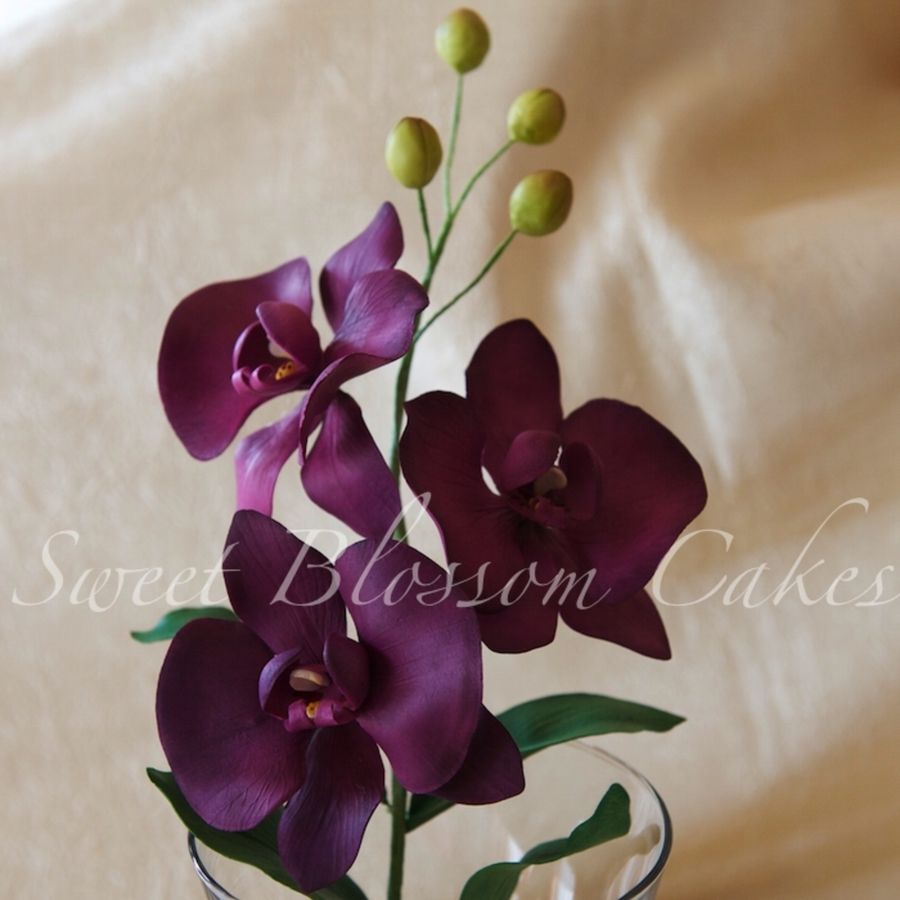 Sugar Moths Orchid on Cake Central