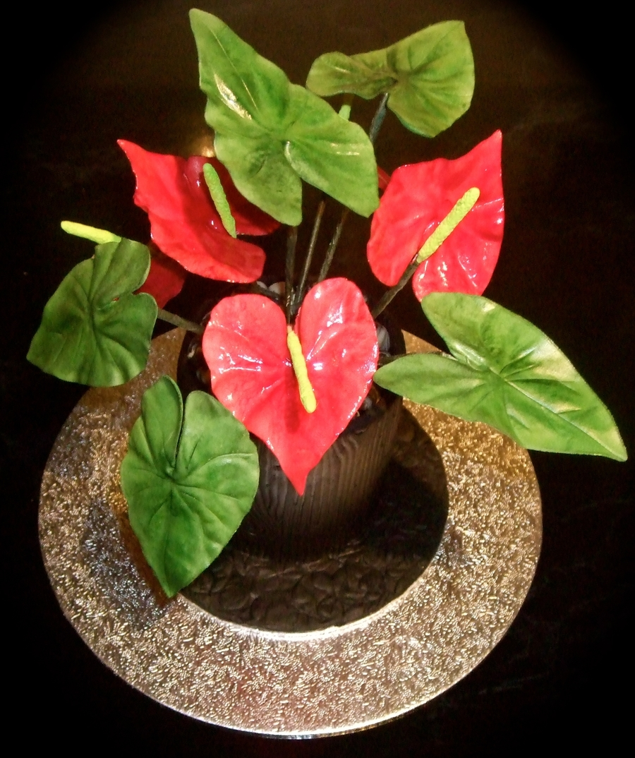 Anthurium Flowers on Cake Central