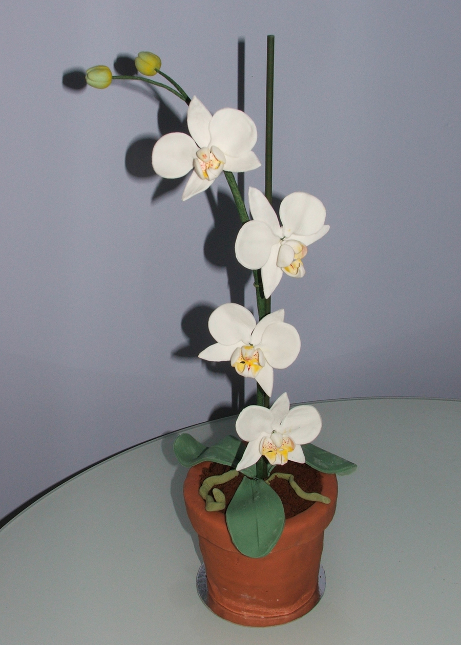 Orchid Pot Plant Cake on Cake Central