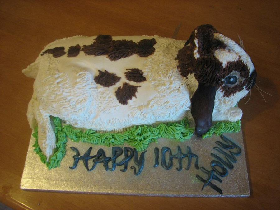 My Daughters 10Th Birthday Cake Formed To Look Like Her Pet Mini Lop Rabbit Called Milo Mud Chocolate Cake Covered In Ganache And Modellin... on Cake Central
